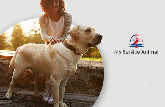 Common service dog breeds