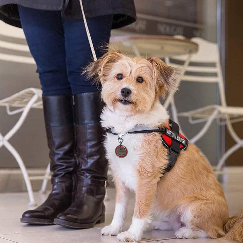 ESA dog with tag