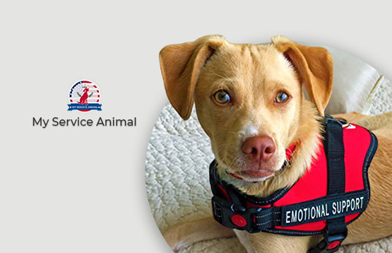 How emotional support animals help people article