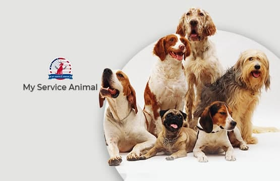 How to get an Emotional Support Animal in NYC?